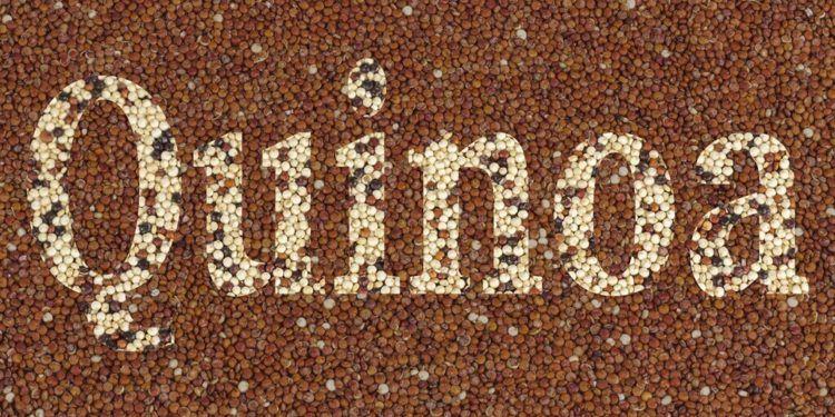 Toda la info sobre el Quinoa, un superalimento