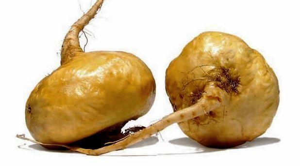 propiedades de raíz de maca