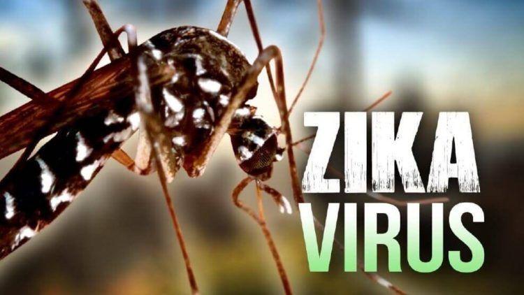 Conoce todo sobre el virus del Zika