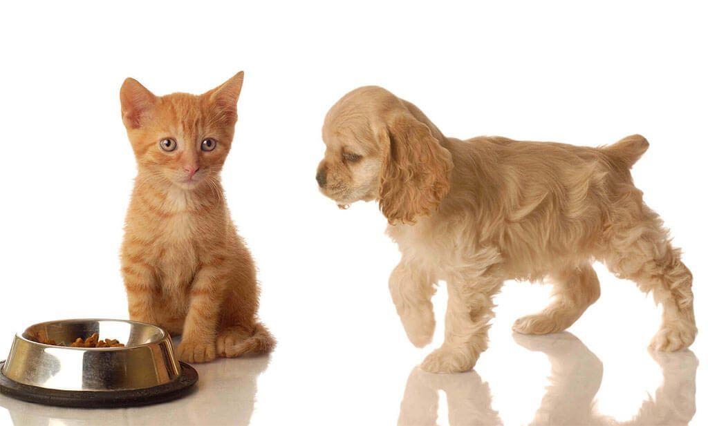 El alimento de las mascotas puede ser causa de alergia