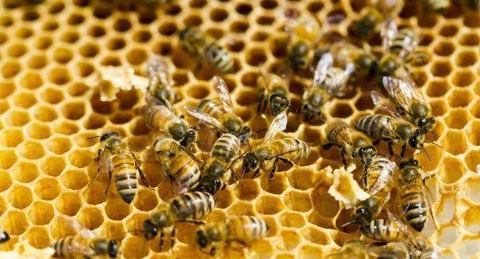 Apiterapia, terapia con abejas