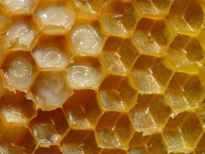 Panal de abejas, posible detonador de la Tripofobia